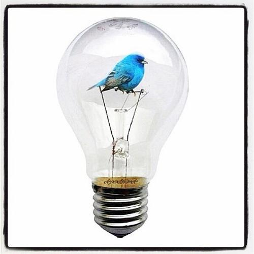 Ampul içinde Twitter kuşu