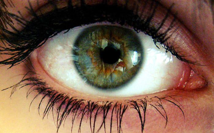 İnsan gözü