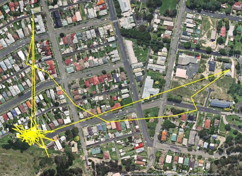 Kedi-guzergahlari-GPS-01