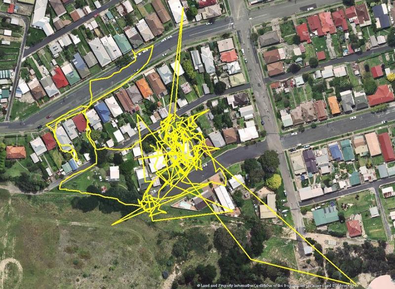 Kedi guzergahlari GPS 03
