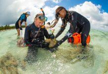 Büyük set resifi mercan
